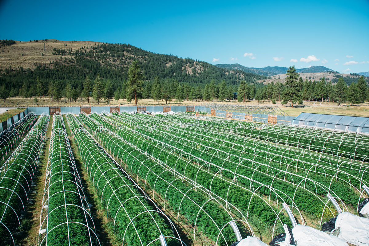 clean-green-certified-sungrown-cannabis-lazy-bee-gardens-3.jpg