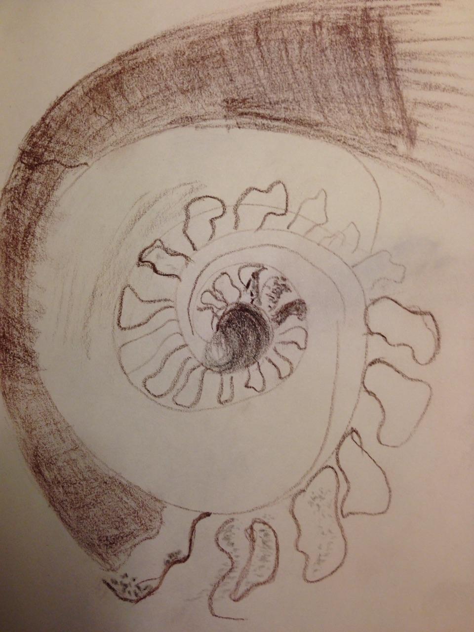 Ammonite Body Image.jpg
