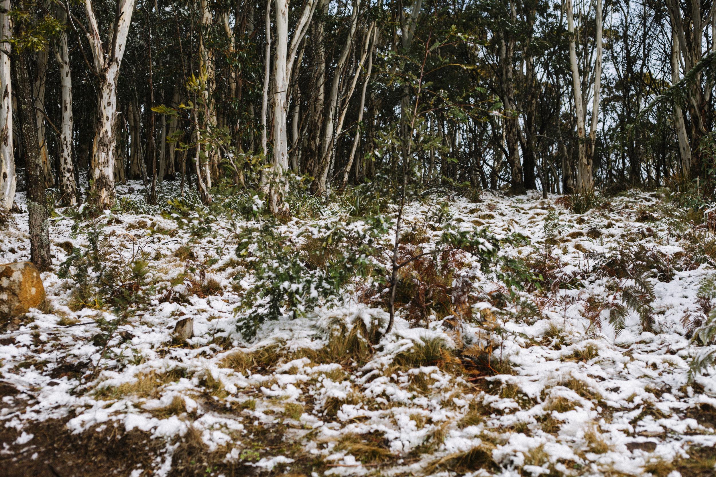 MountMacedon_6881.jpg