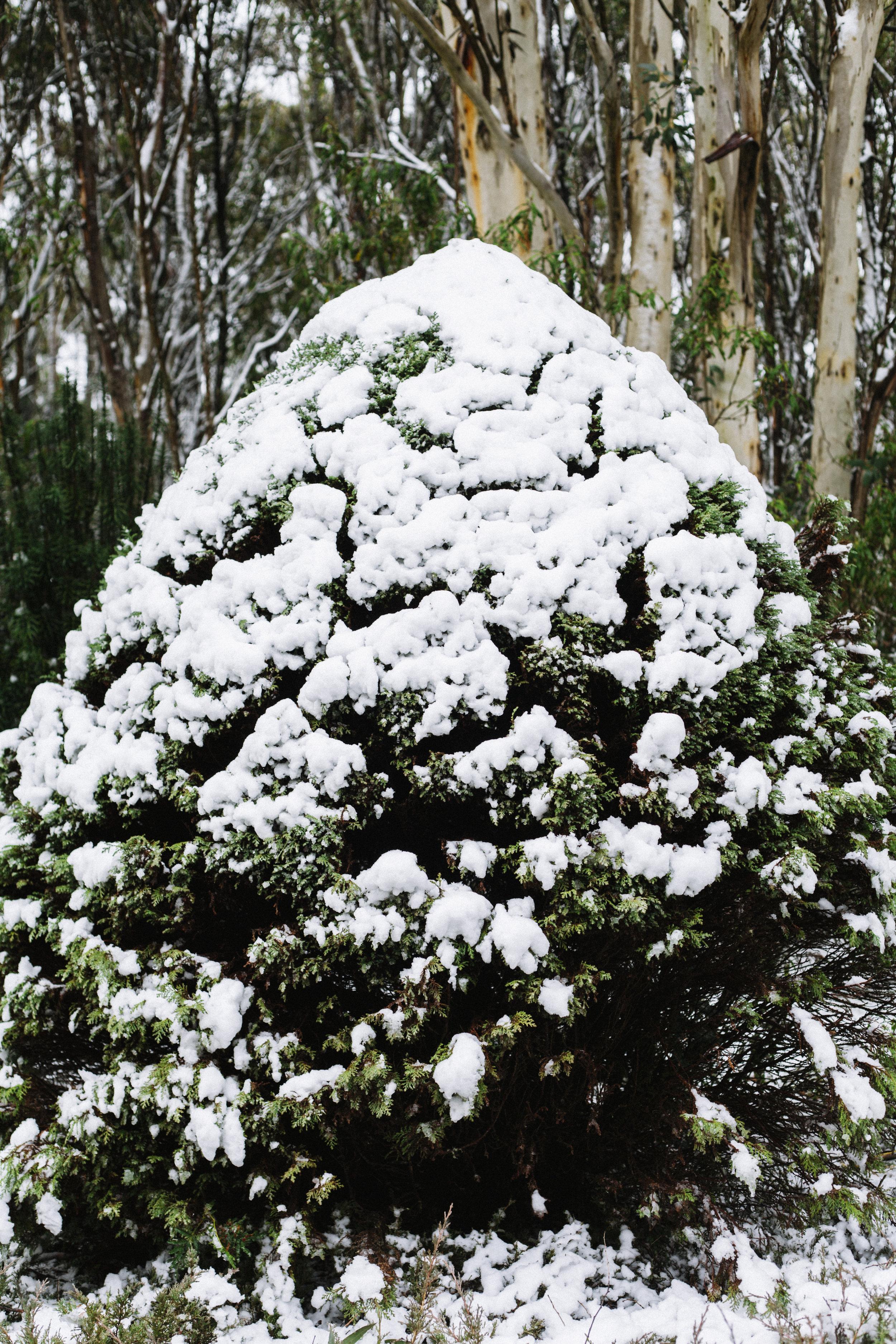 MountMacedon_6911.jpg
