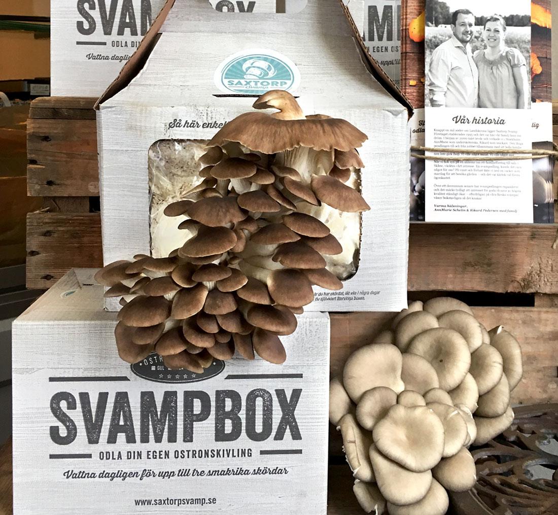Svampboxen räcker till cirka tre skördar, den första är oftast störst. När du inte längre får någon ny svamp ska du självklart återvinna boxen.