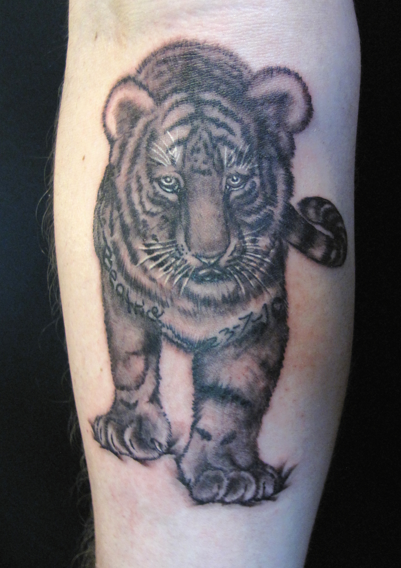 Kirby baby tiger.jpg