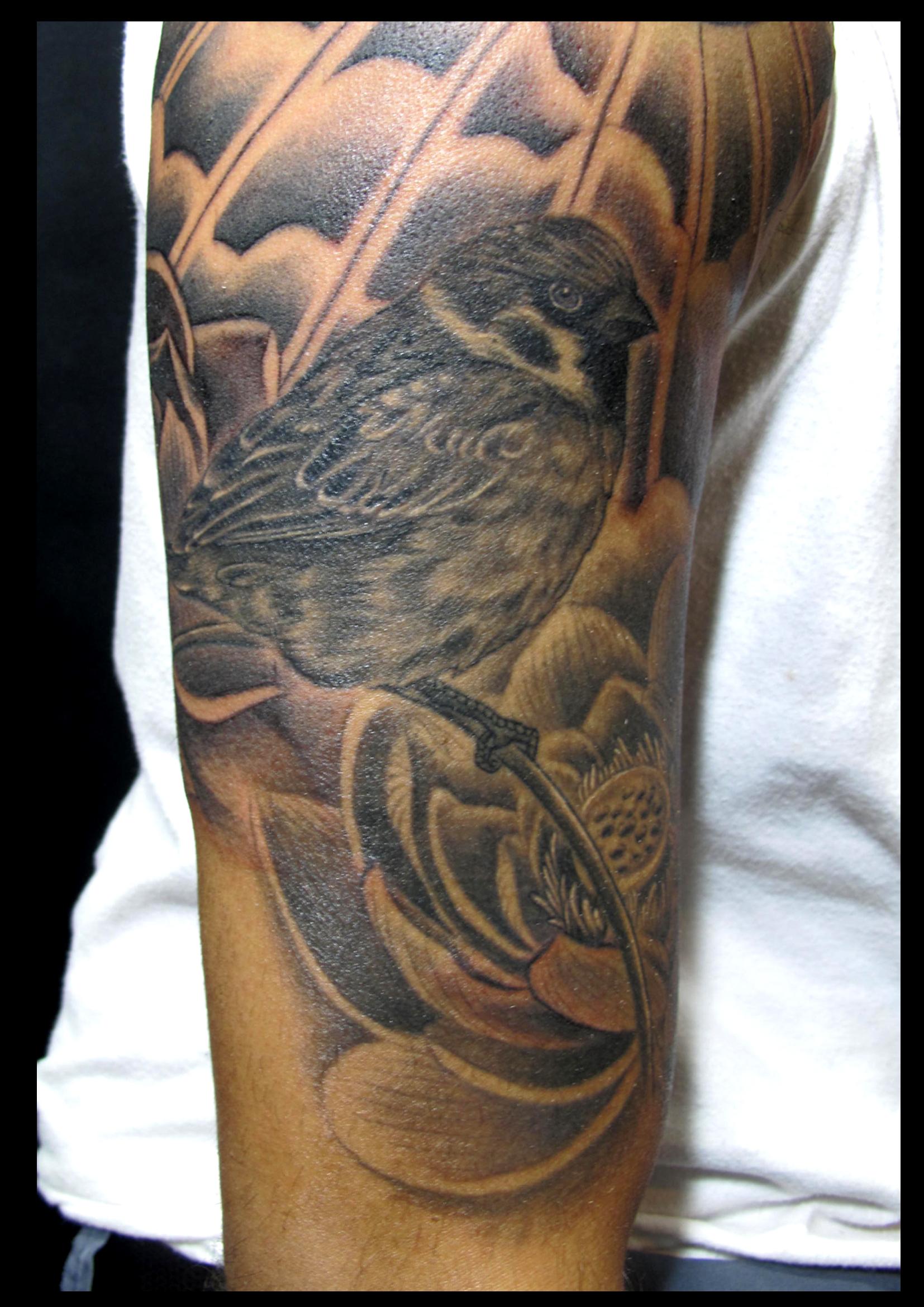 Sparrow on arm.jpg