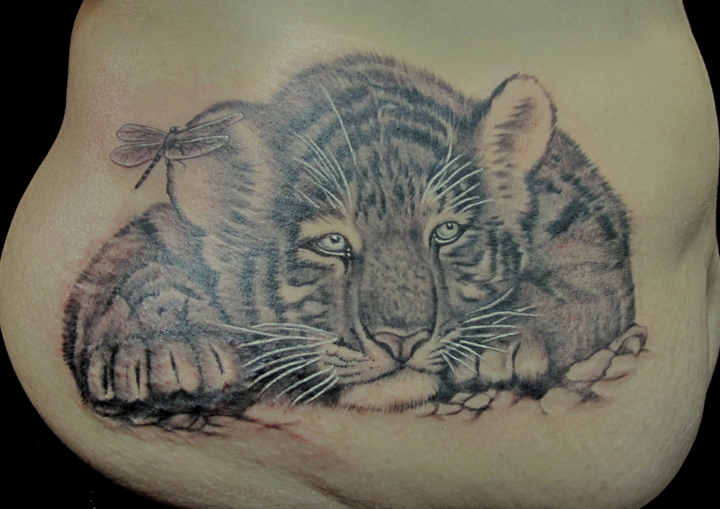 tiger cub on stomach.jpg