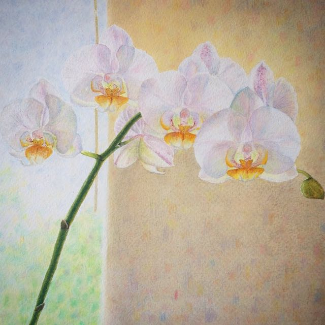 Orchids Before the Window, watercolour and pencil crayon