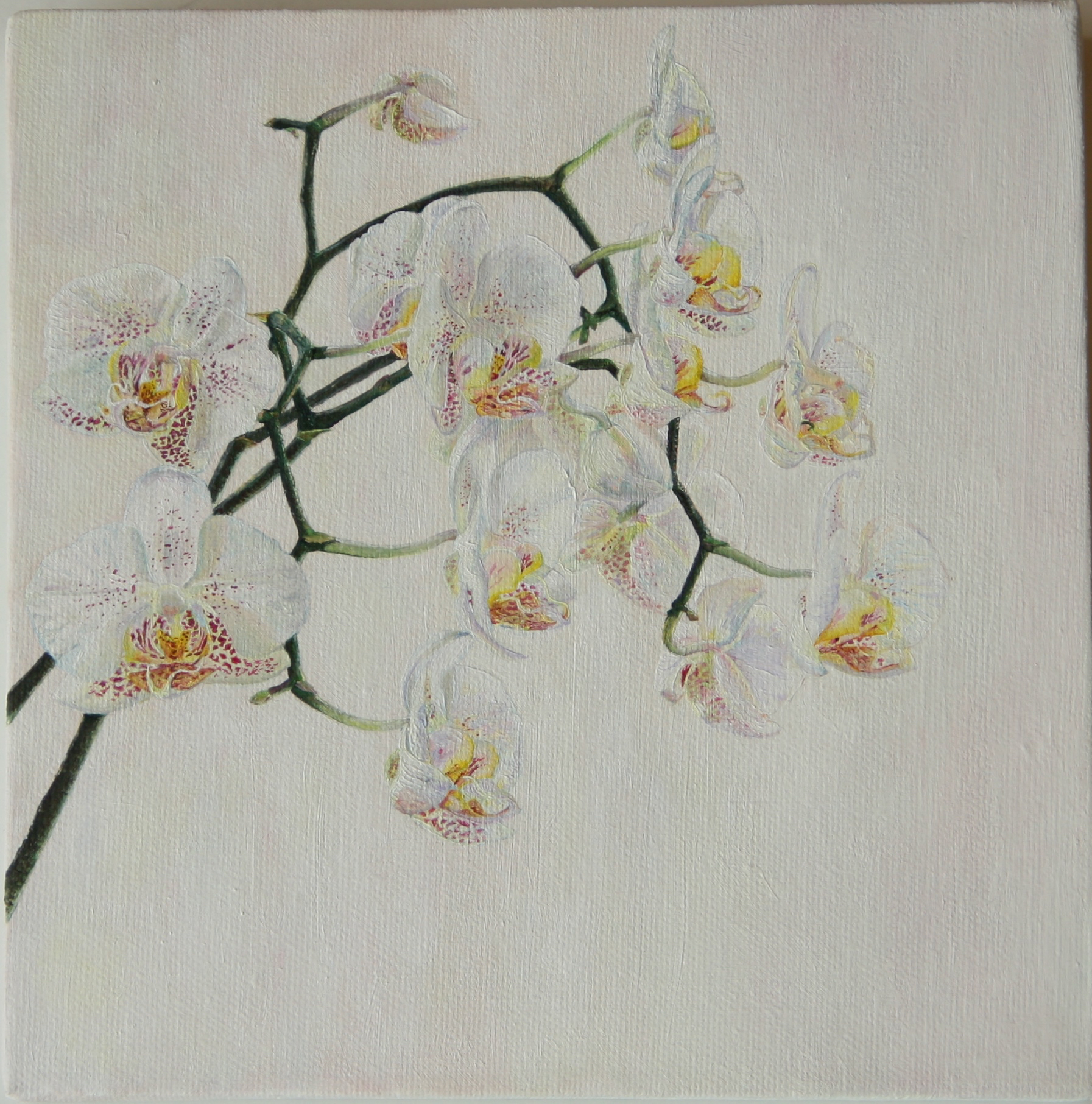 White Orchids - oil painting 20.5 x 20.5 cm