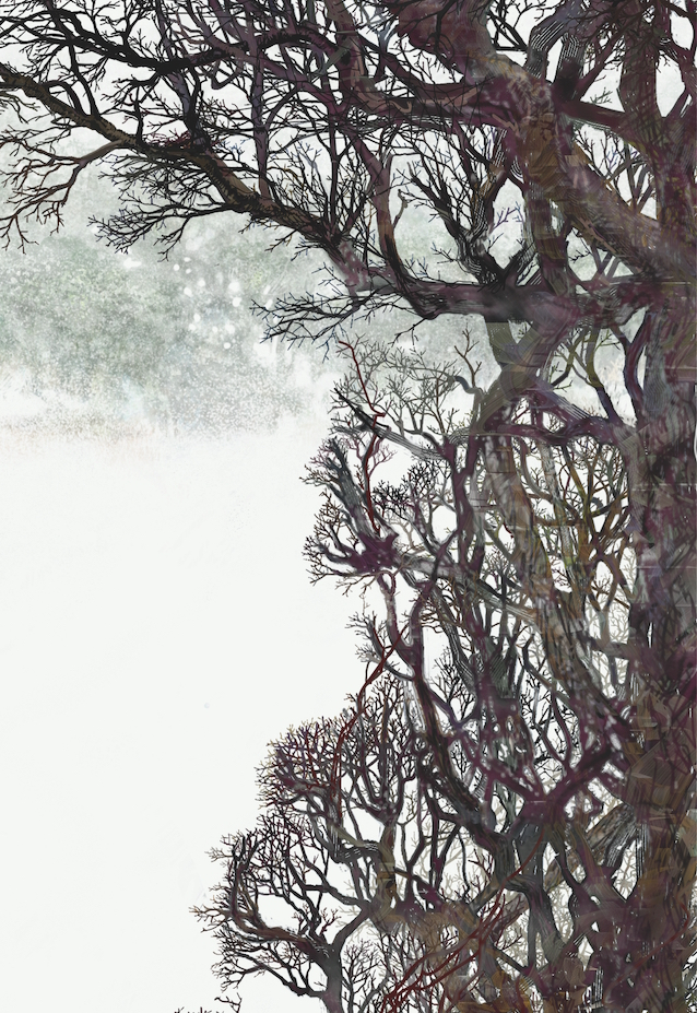Mini Midwinter Hedge, Digital Artwork. Realisation of a twig obsession.