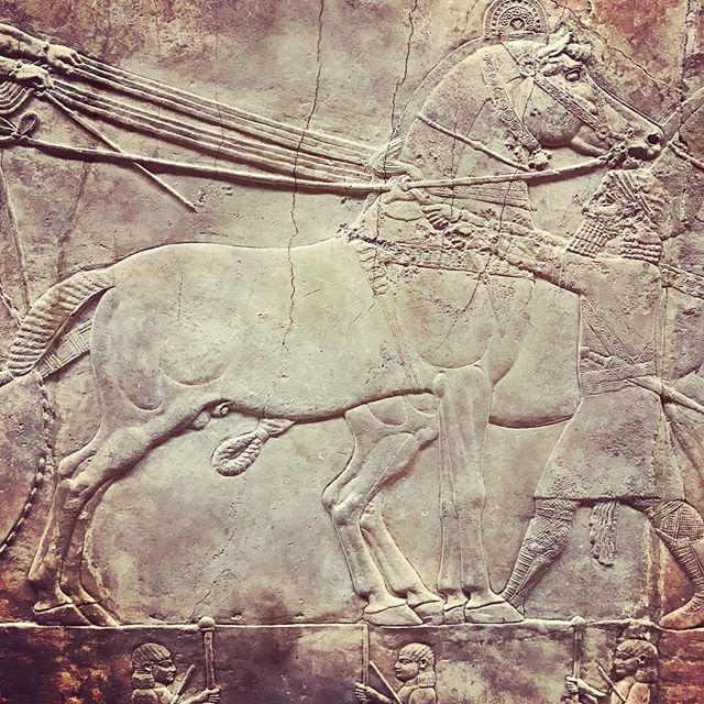 #lionhunt #Assyrianfrieze @thebritishmuseum