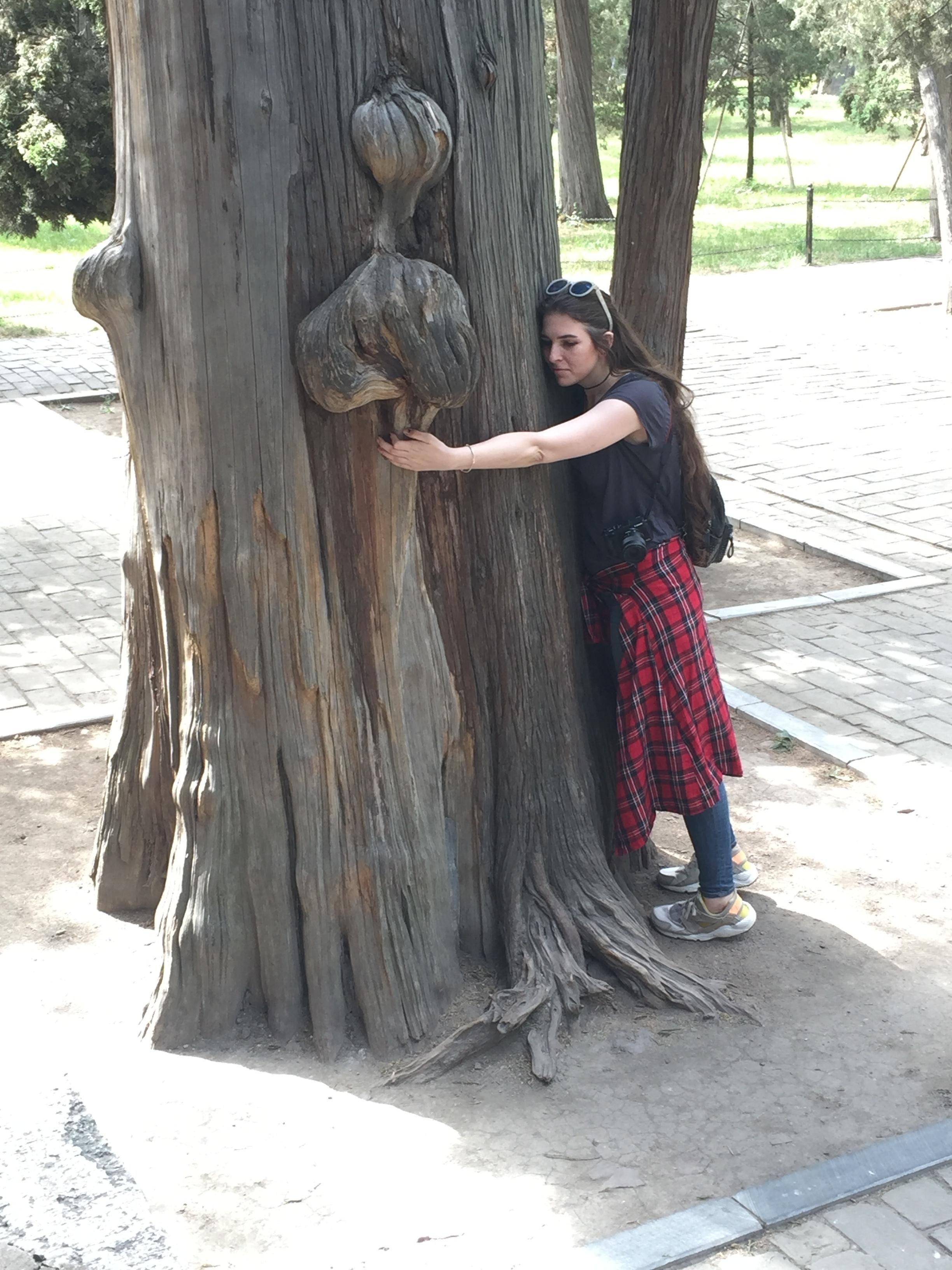 Oldddd tree.