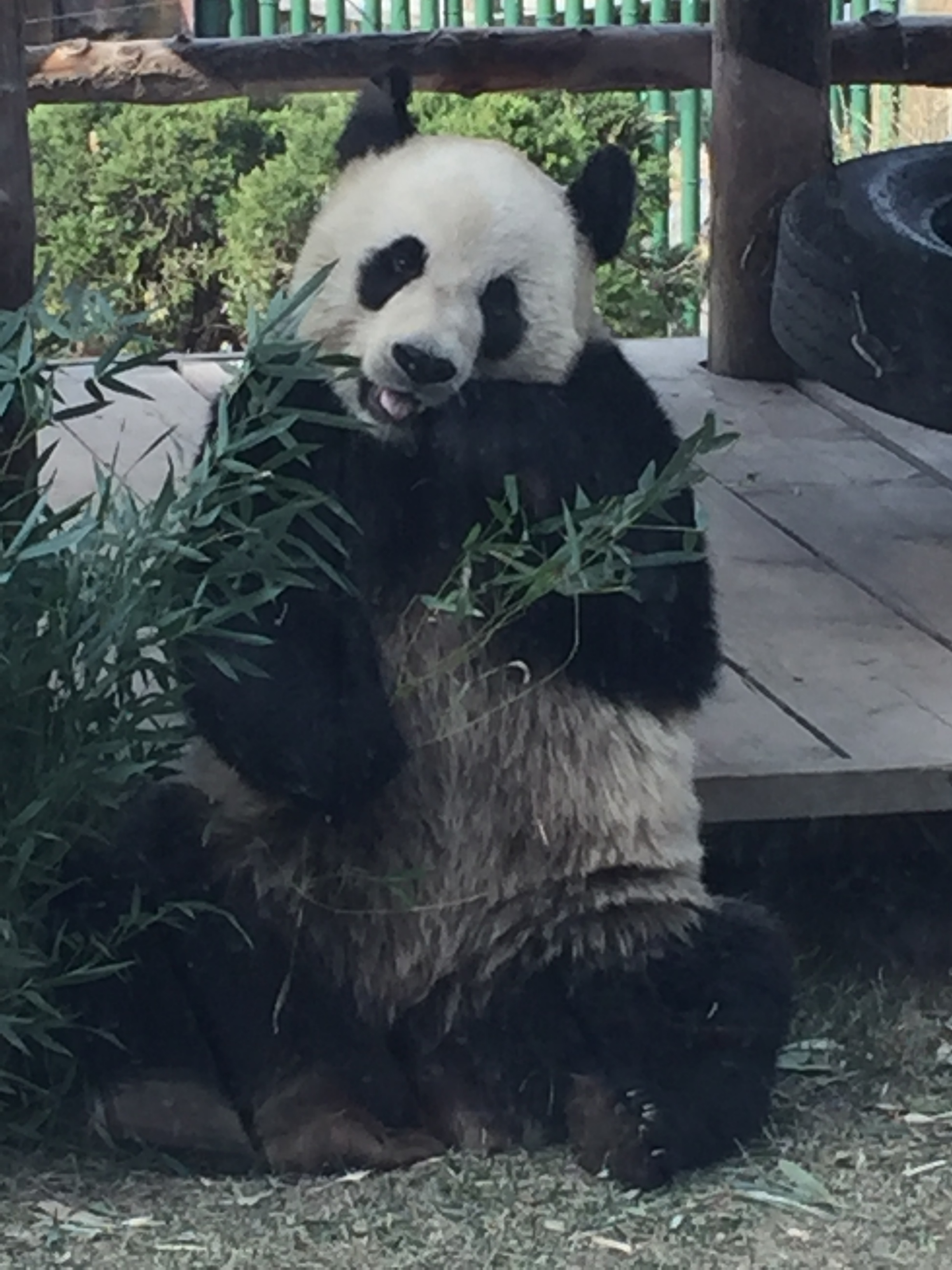But not as much as bamboo.