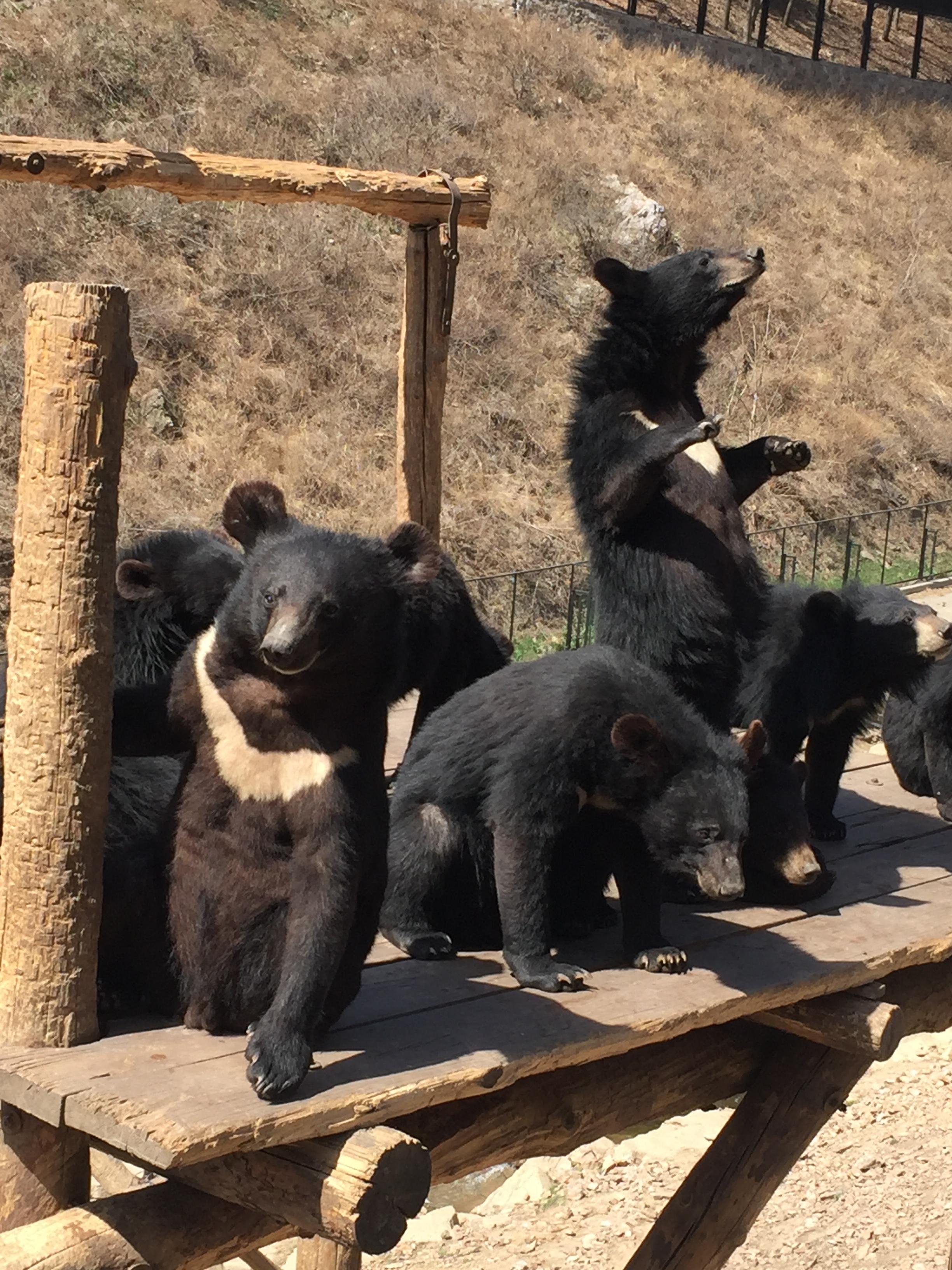 The bear literally danced.