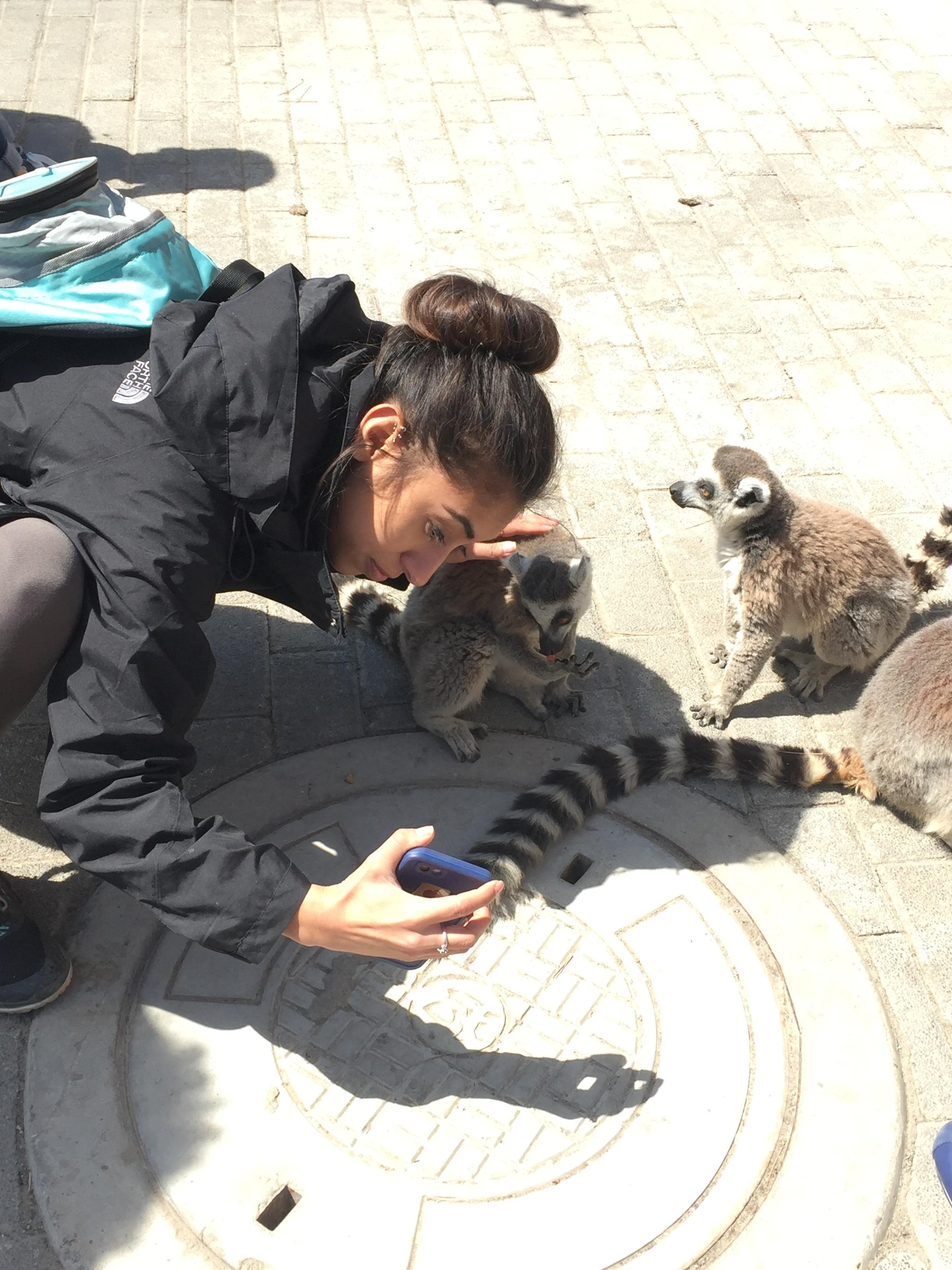 Lemur selfie.