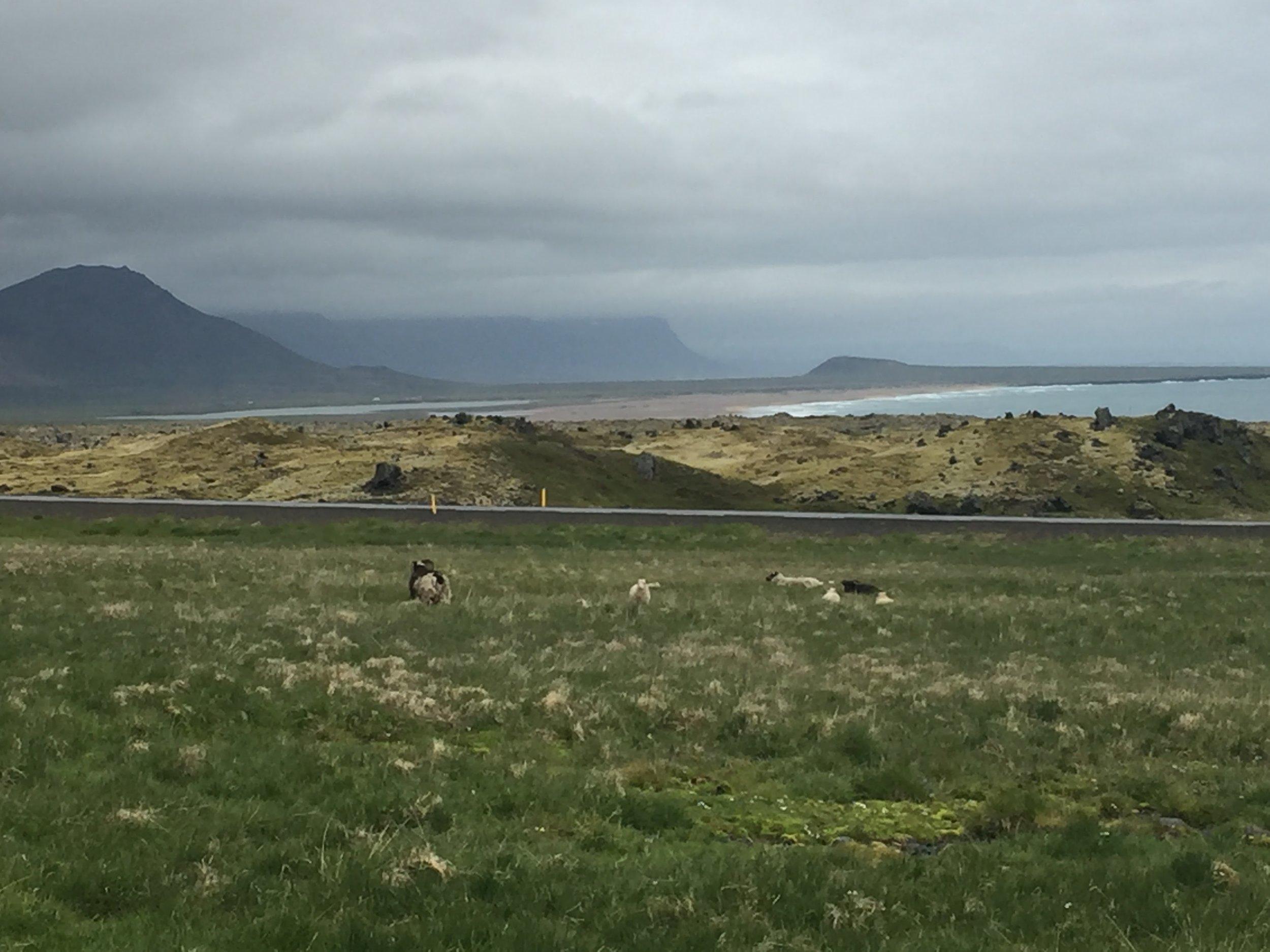 Sheep & Scenery