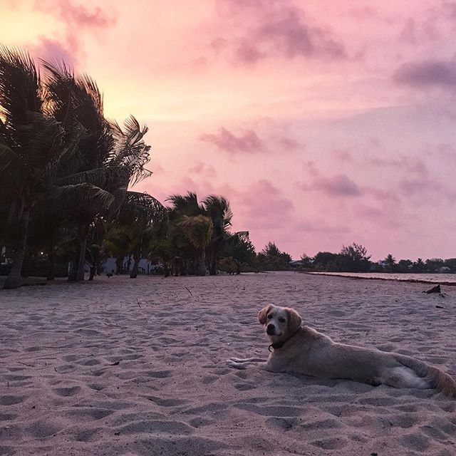 LOOK AT THIS GOOD BOY ________________________________ #beachsunset #placencia #belize #doggos #cutepup #wander #travel #wedontdeservedogs