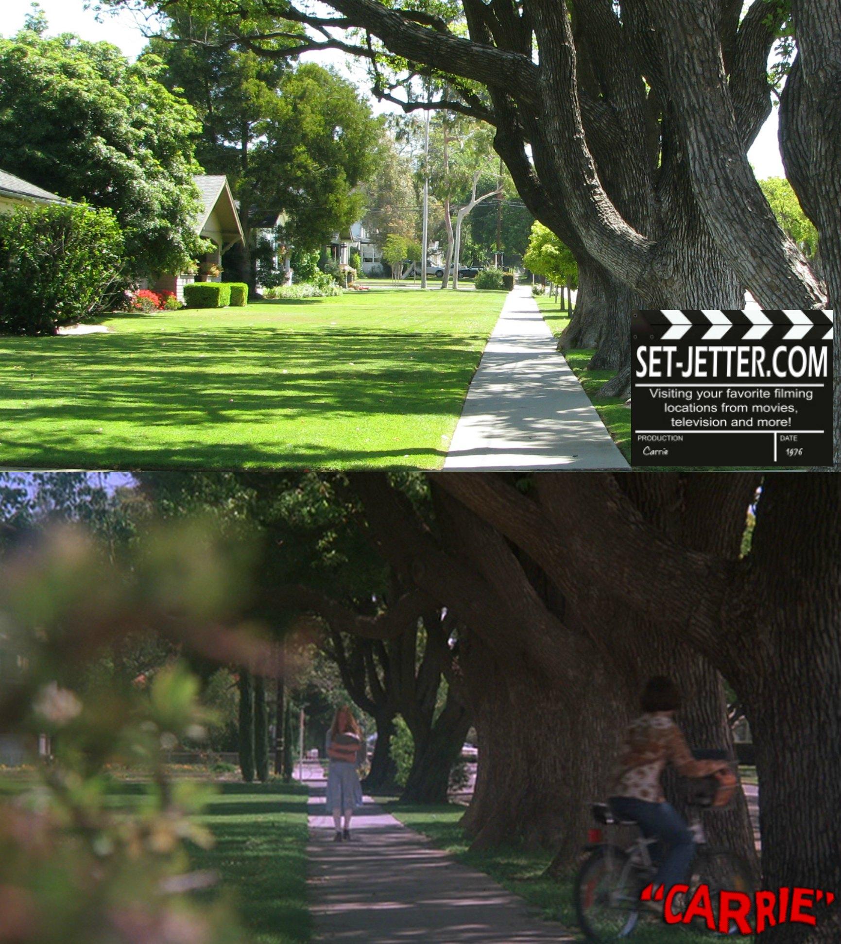 Carrie trees 01.jpg