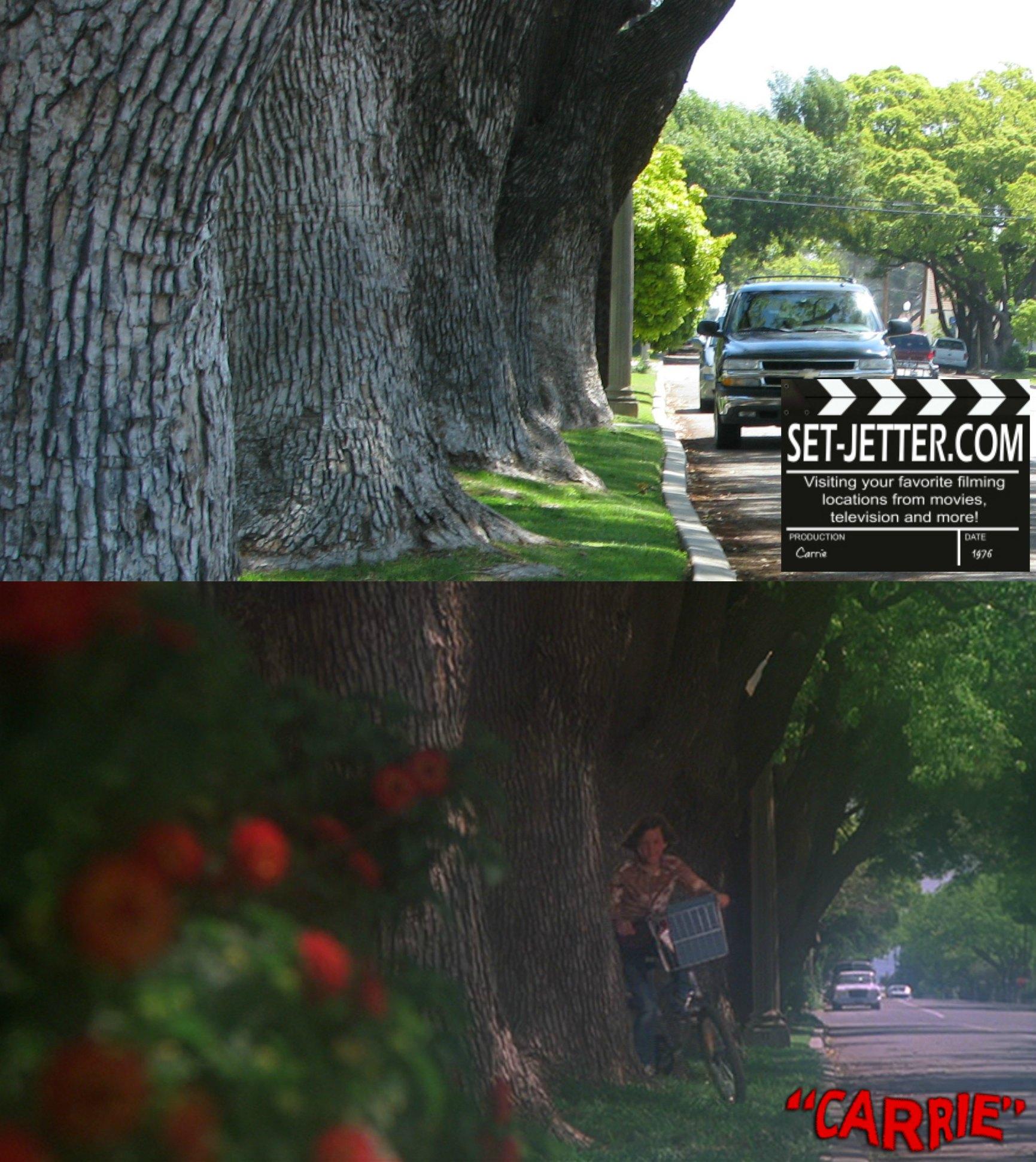 carrie trees 03.jpg