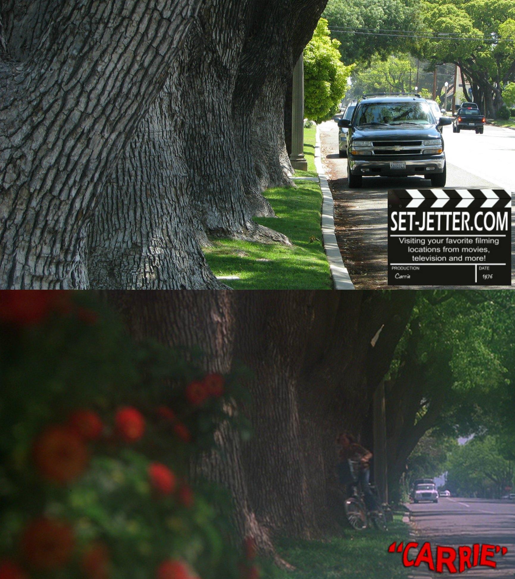 carrie trees 04.jpg