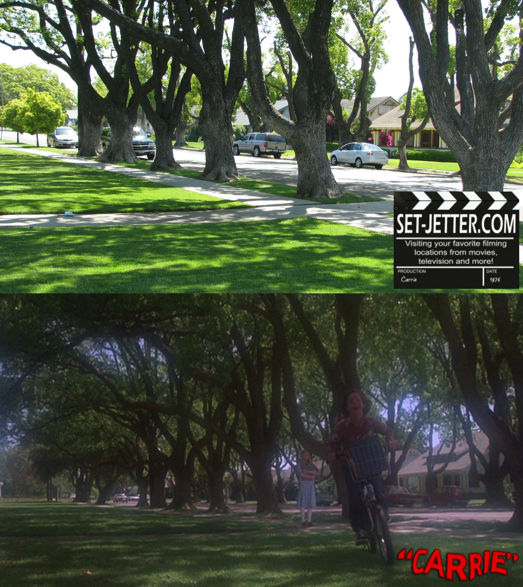 carrie trees 05.jpg