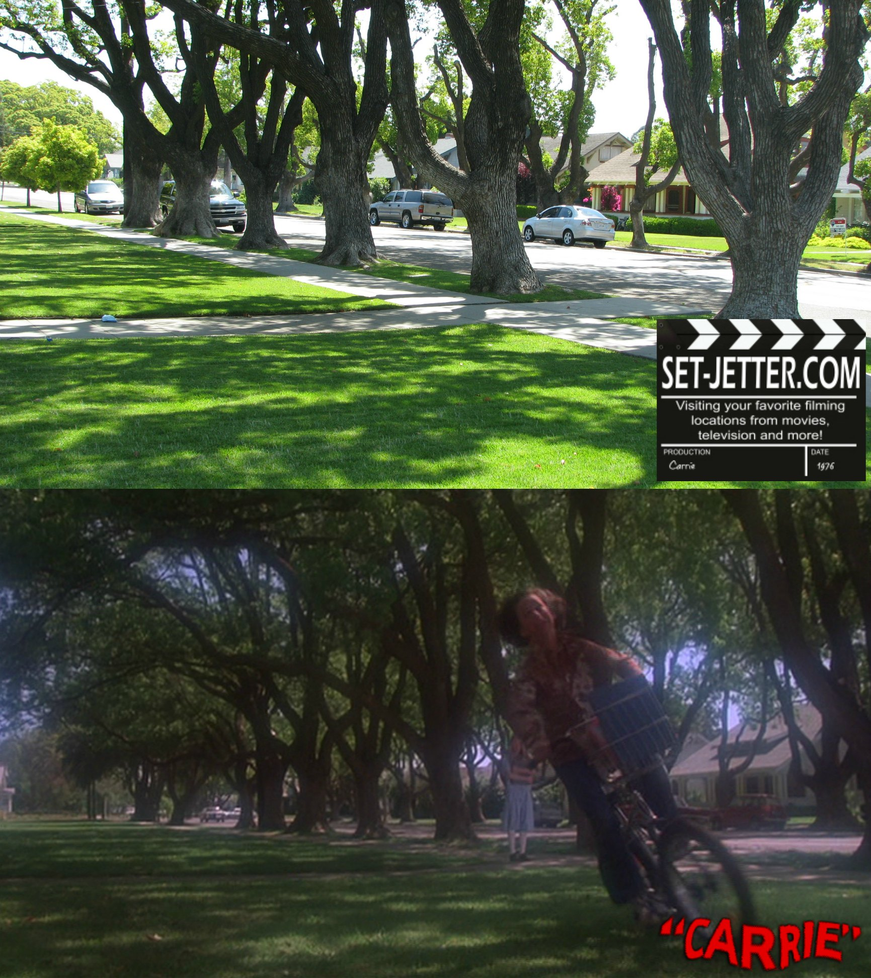 carrie trees 07.jpg