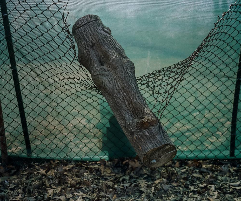Suspended Log, 2005