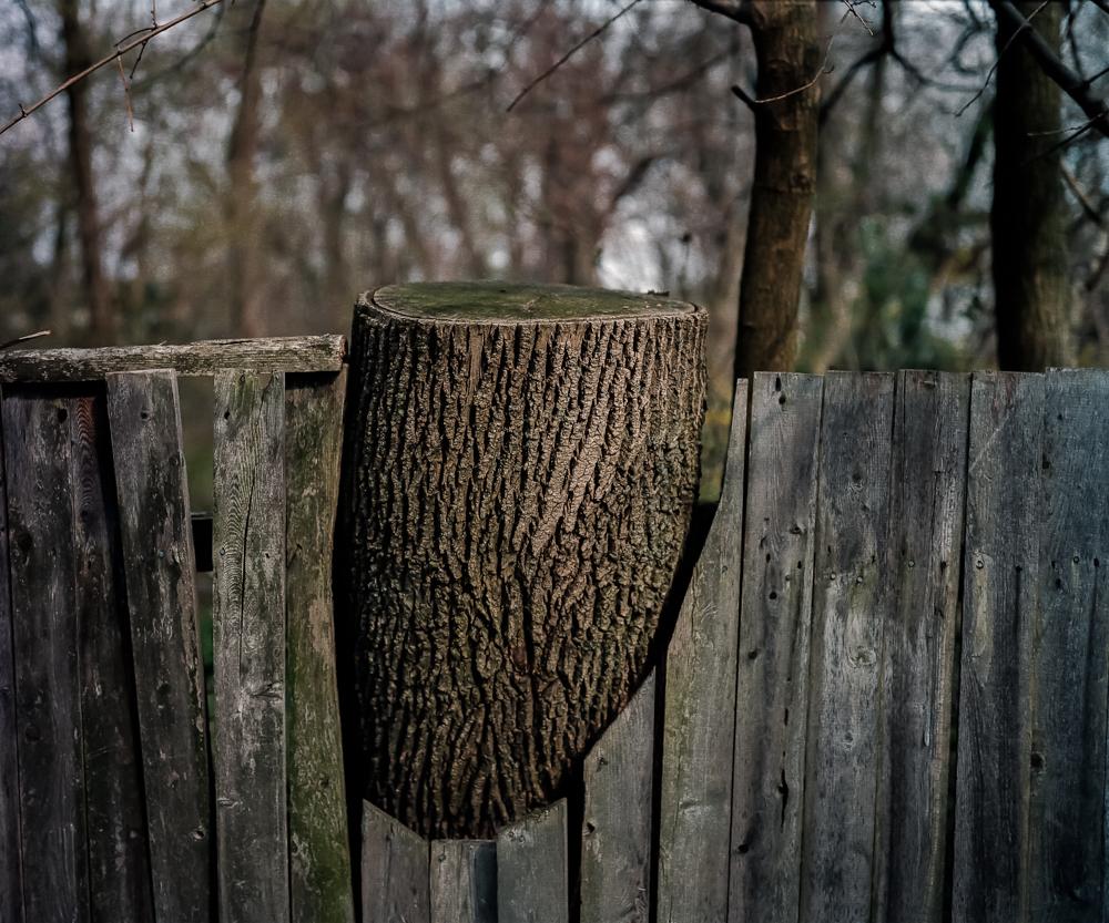 Chopped Tree, 2001