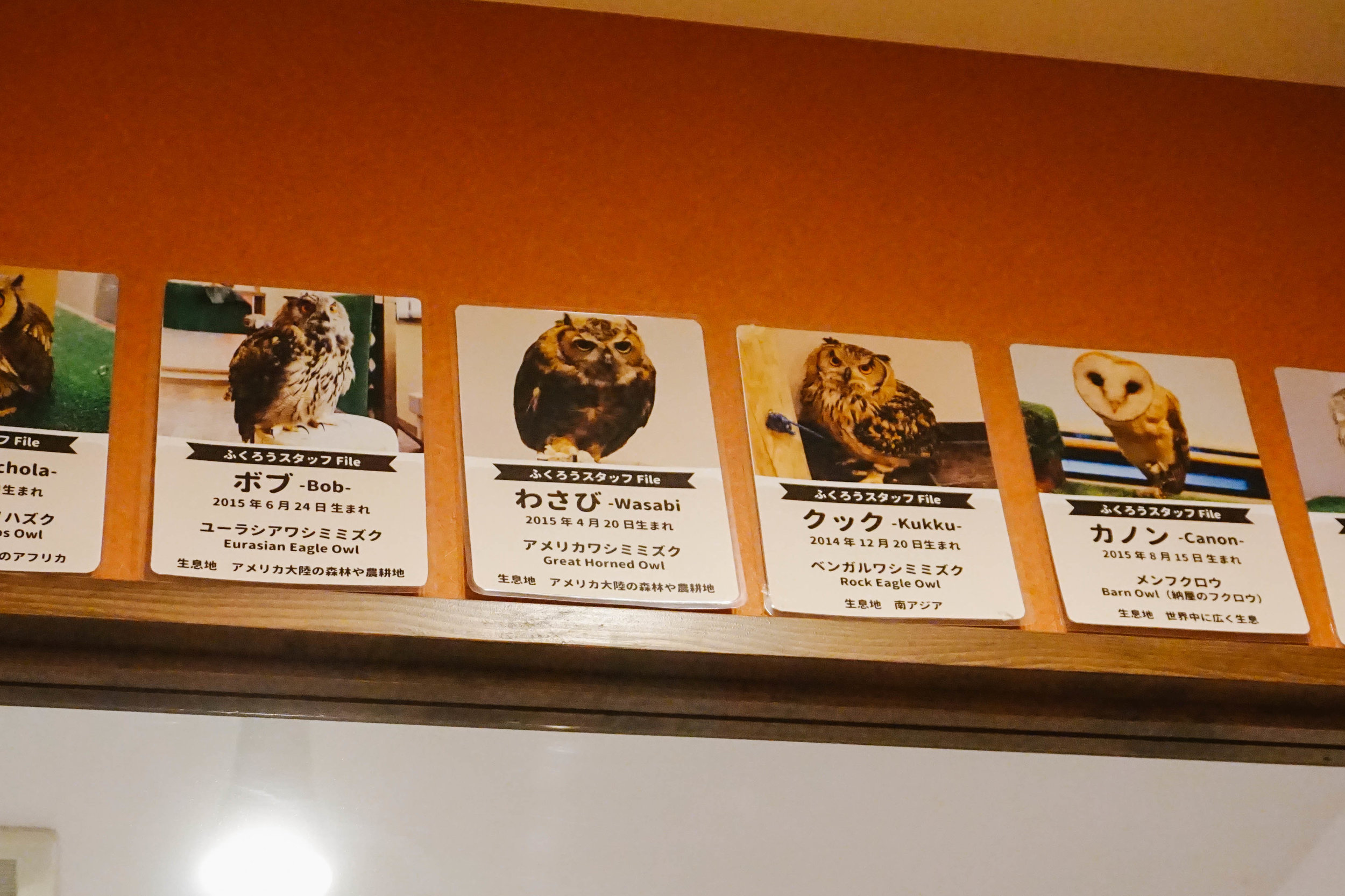 The cutest names for the cutest owls!