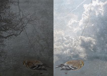 "SECOND PLACE  - A Question of Philosophy (2016) | Deborah Maufer | Digital art on aluminum, diptych | 14x21"" | $130"