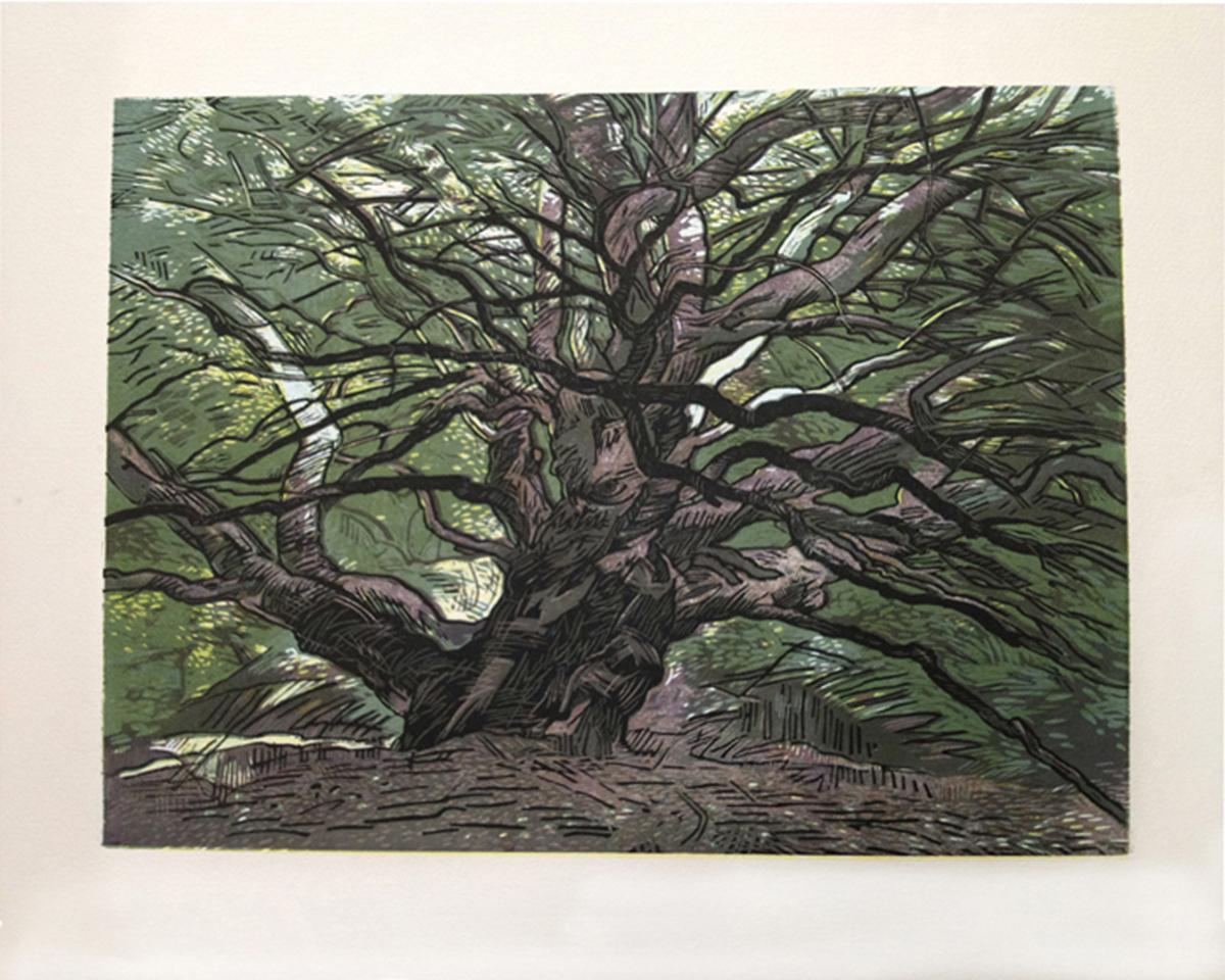 "SECOND PLACE  - Donne Westerman   ""El Toyonal Oak""   Multiple block woodcut"