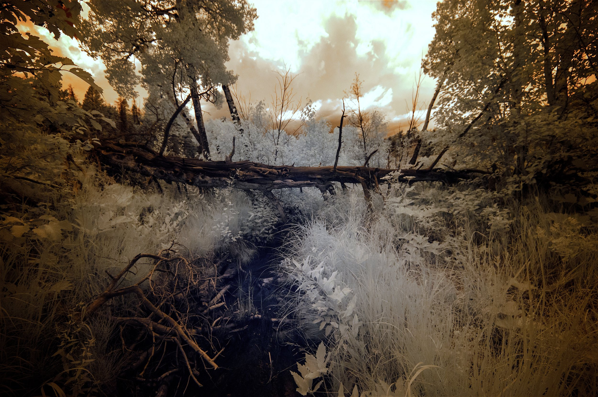 "HONORABLE MENTION  - Robert Zucker | ""Fallen Angel"" | Photography"