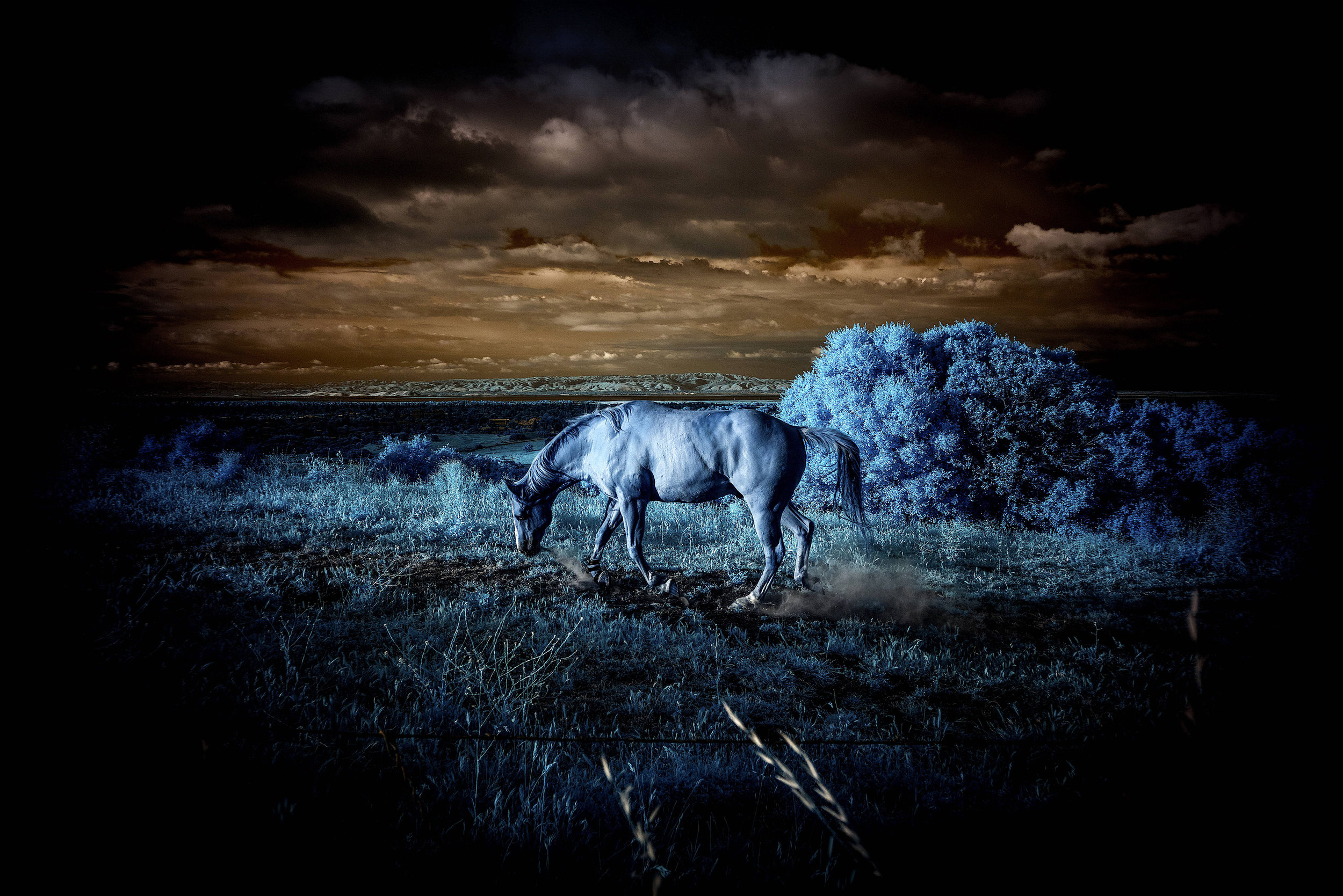 THIRD PLACE  - Robert Zucker | A Dark Horse | 29x35
