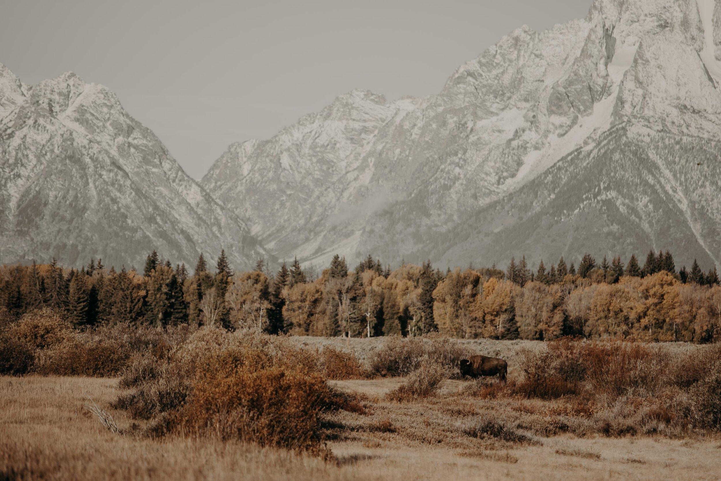 montana-0566-2.jpg