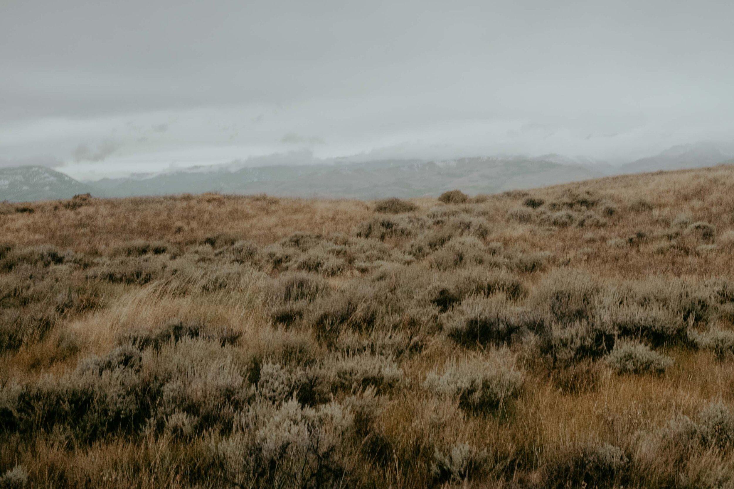montana-8252.jpg