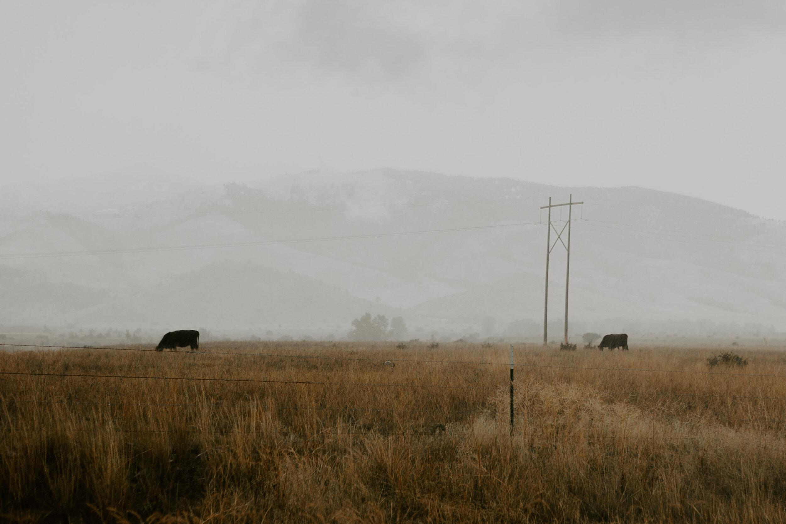 montana-1293.jpg