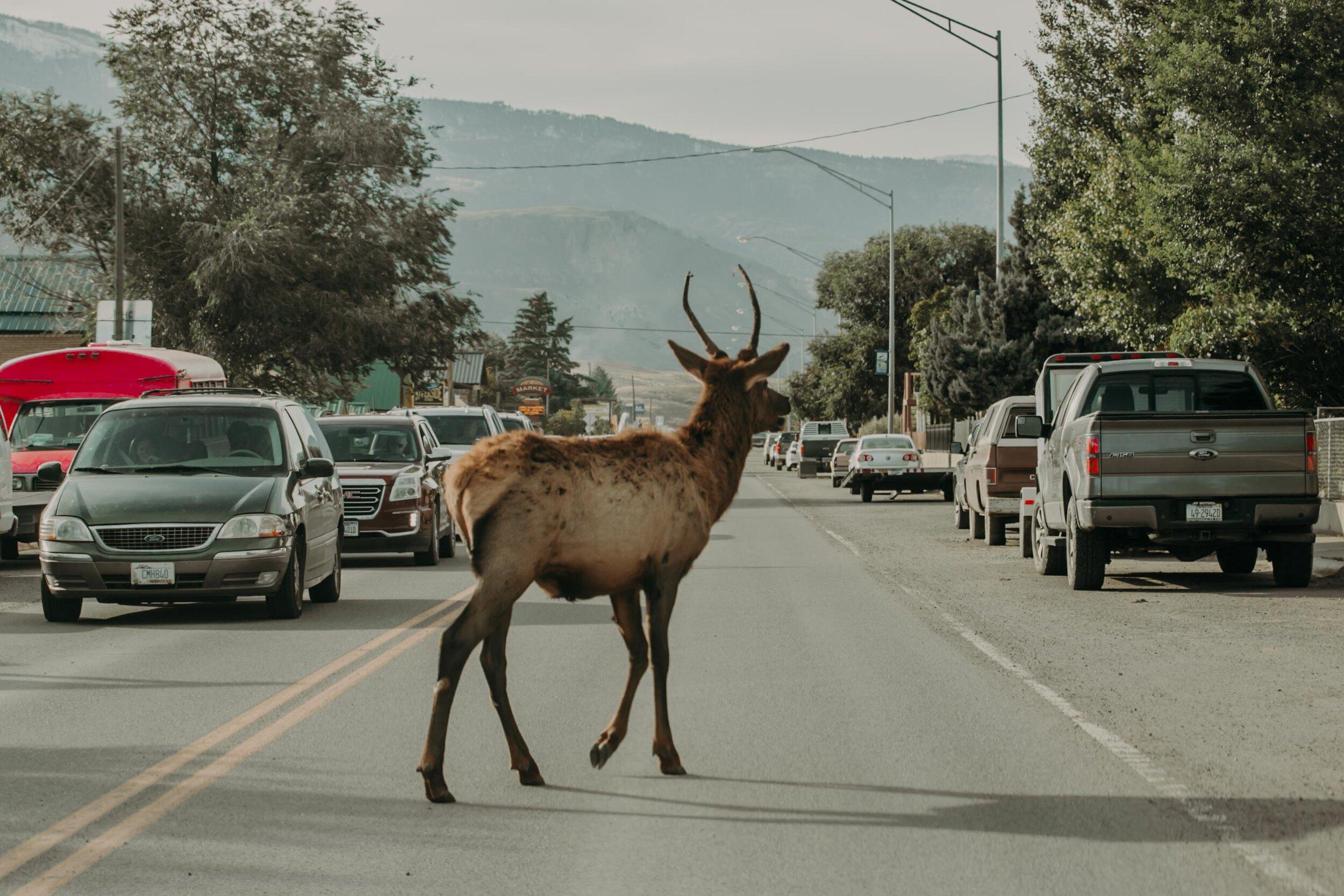 montana-1234.jpg