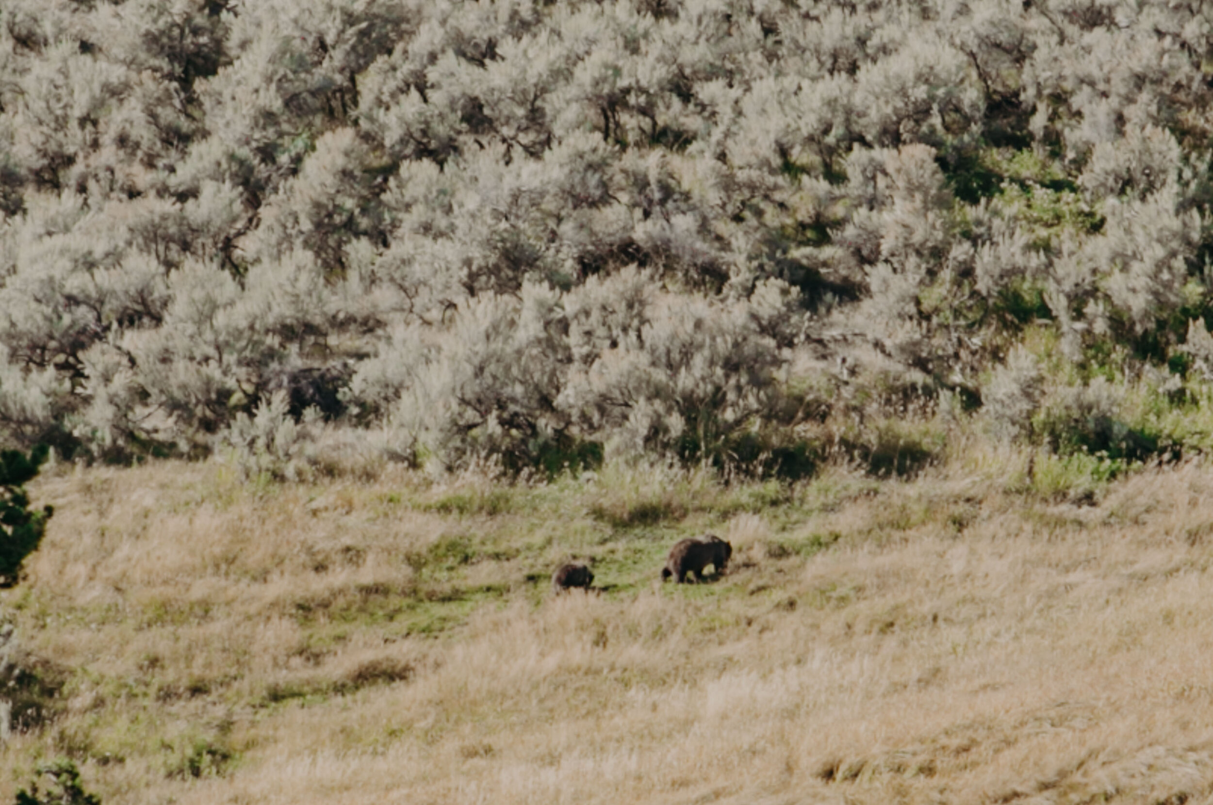 montana-1182.jpg