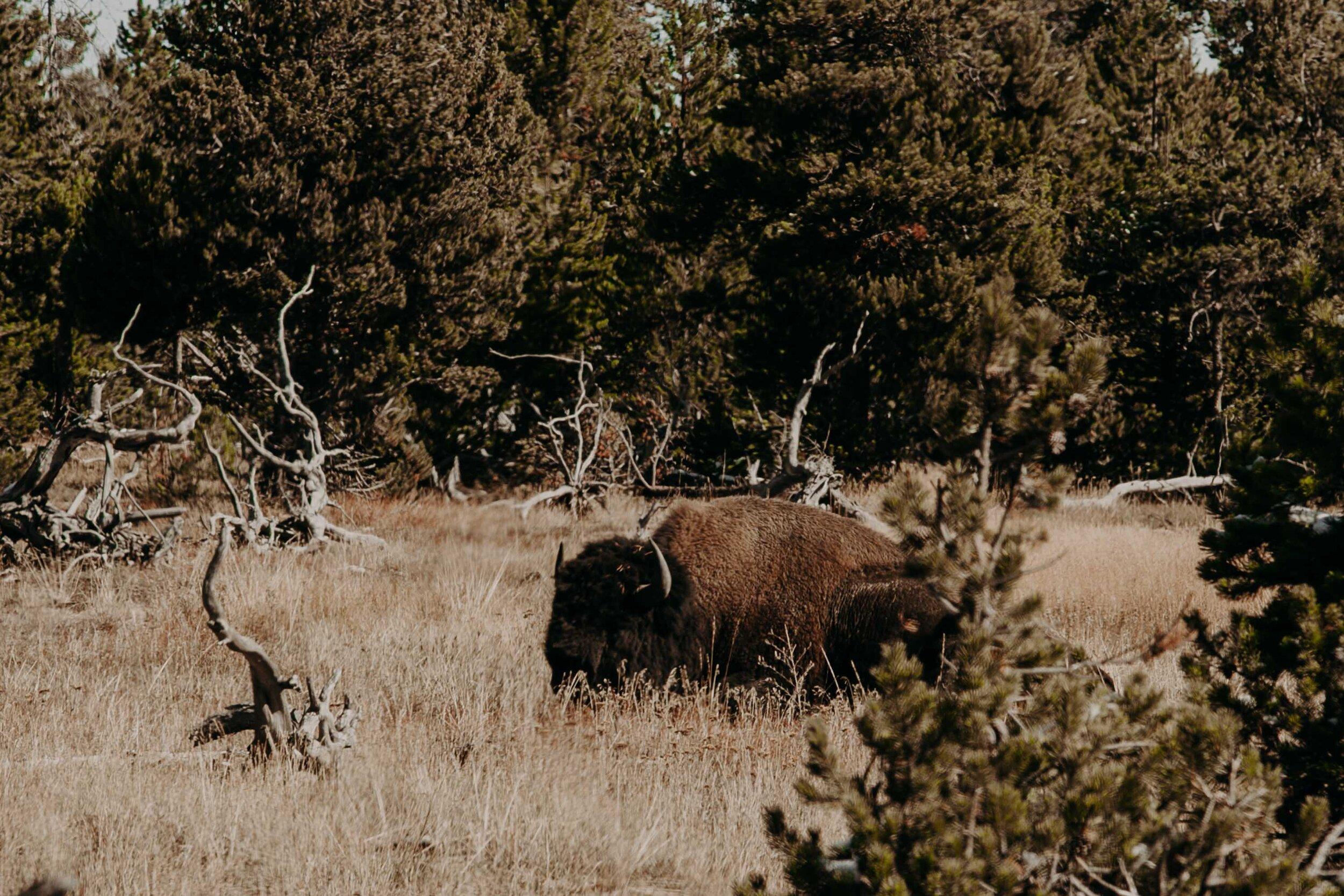 montana-0640.jpg