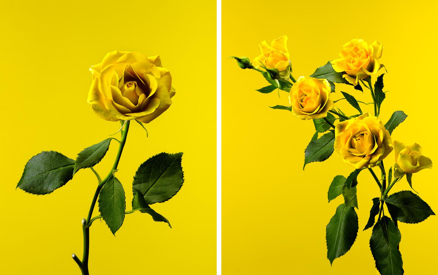 grouping yellow.jpg