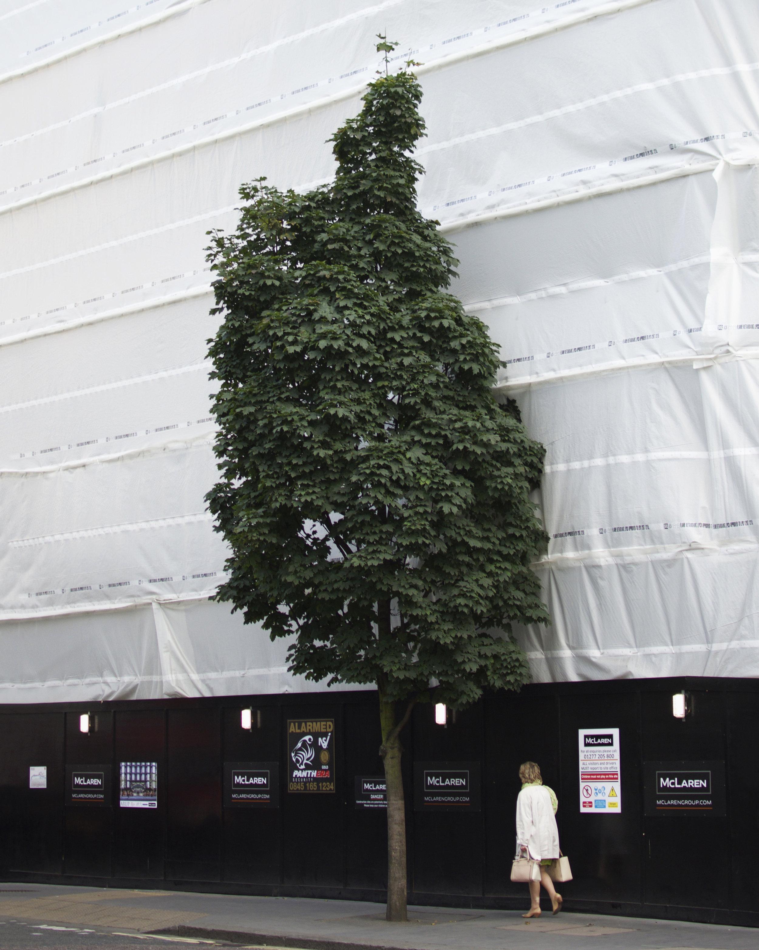 London_Woman_Tree.jpg