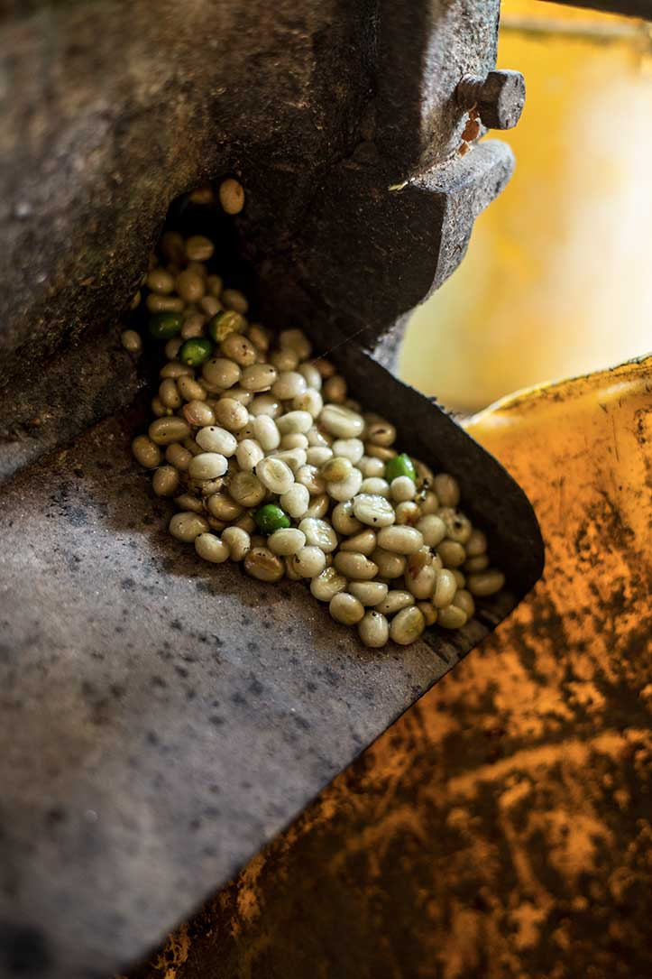 coffee_process_Beans_Minca_photo_tours.jpg