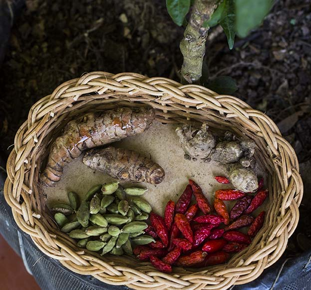 herbs-iguanasoul.jpg