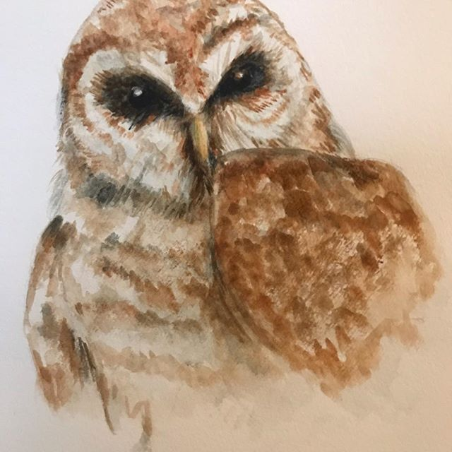 My first owl from a Bird Watercolor Class with Kristina Knowski today.  Great experience!  #watercolorsbirds #birdwatercolor #owl #barredowl #drawinginwardarts #birdillustration #wiseowl