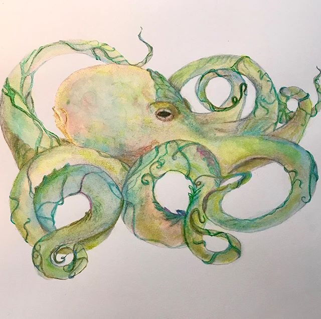 My art is much like an octopus.  Many limbs connected by singular desire to travel into a creative life. #octopusart #creativelife #octopuswatercolor #h2otwinkling ##myartstylesaremyriad #drawinginwardarts