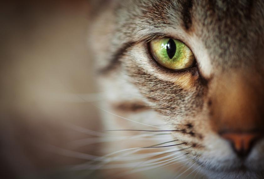 Superior Veterinary Consumer Support