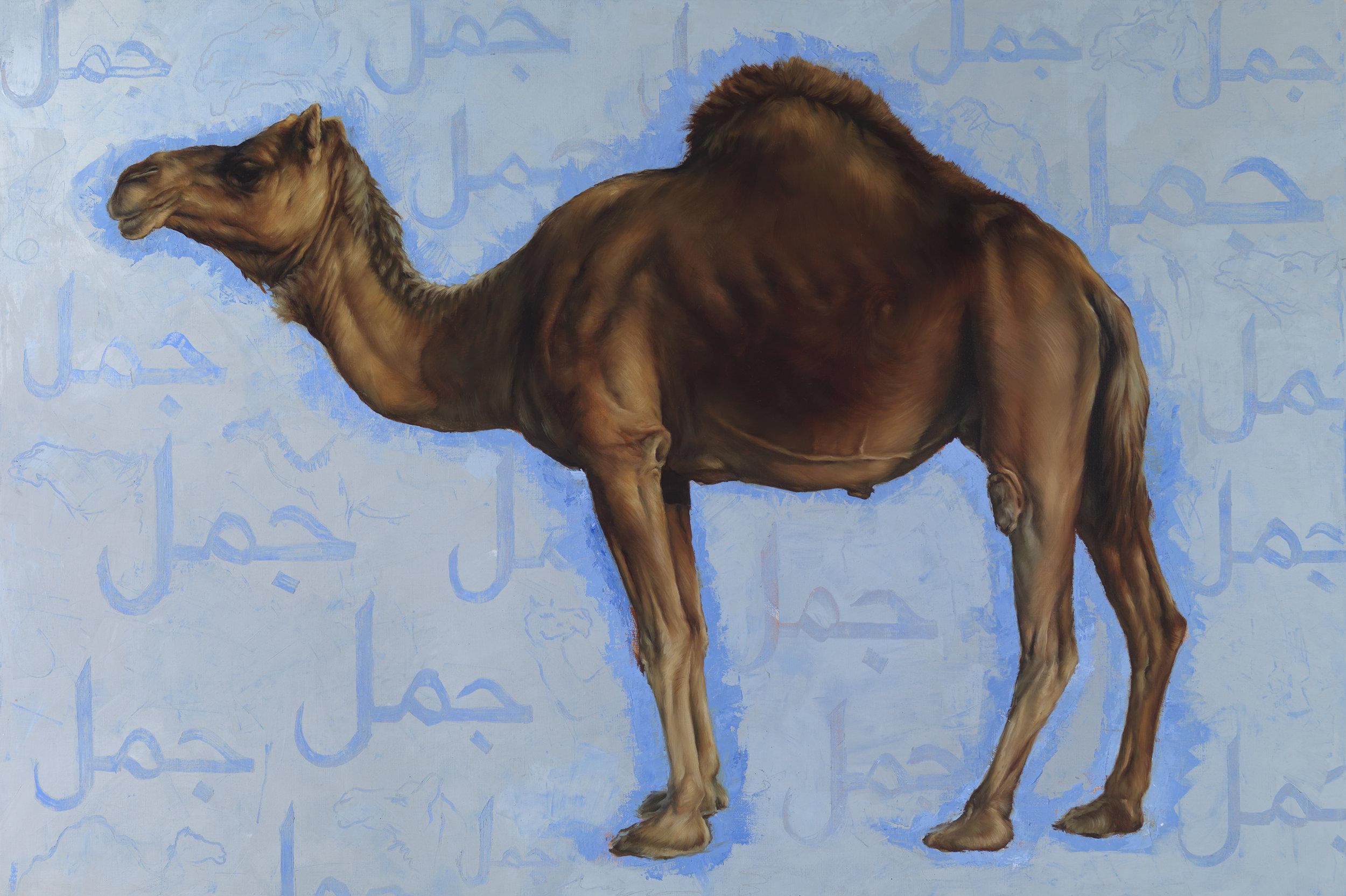 Camel_100x150_3903.jpg