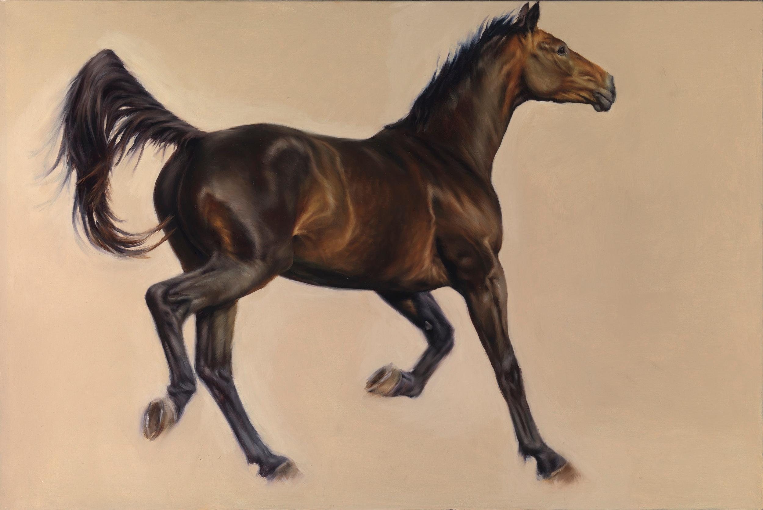 Horse_100x150_3908.jpg