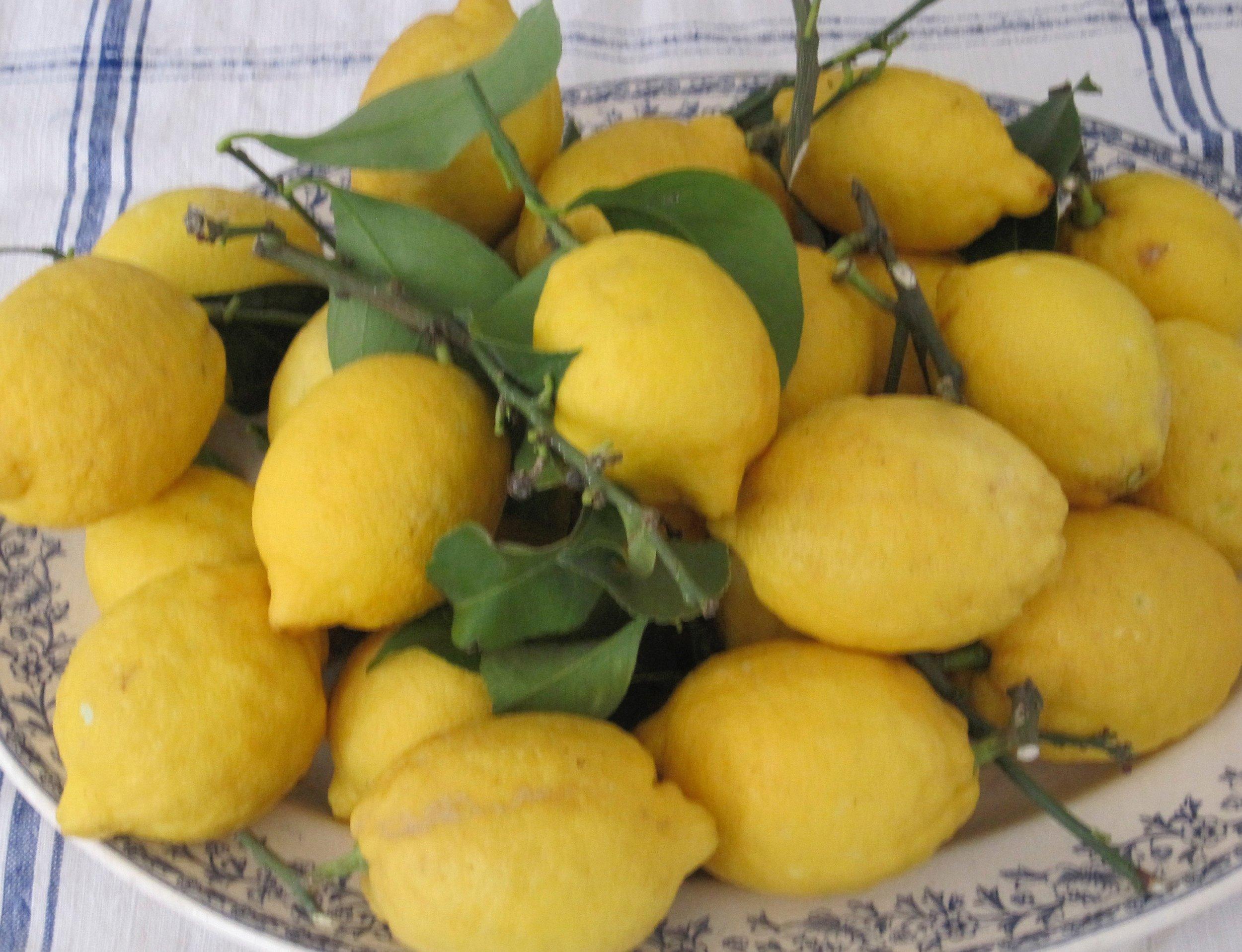 home-grown Eureka lemons