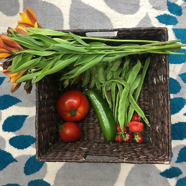 Morning harvest from my garden! 🙏 Yum! Back on memory lane... in  Germany, in my childhood, I ate buttered bread 🥖 with fresh tomatoes 🍅 and a little salt and pepper on it. Plain & simple. 😋 This is going to be my breakfast today - with gluten-free bread now 😘. What is your favorite breakfast? #ilovemygarden . . . . . #healthyliving #tomatoes #breakfast #fresh #yummy #goodvibes #healthyvibes #goodvibesonly #choosegoodvibes #gardenlove #gardenlovers #harvest #readyfortheweekend #nature #inspiration  #naturesperfection #santacruz #amling #amlingdesigns #instagarden #igdaily #instamood #ilovewhereilive  #livinginginparadise #santacruzliving  #naturelover #madeinsantacruz #madeincalifornia