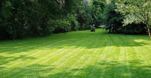 lawn.jpg