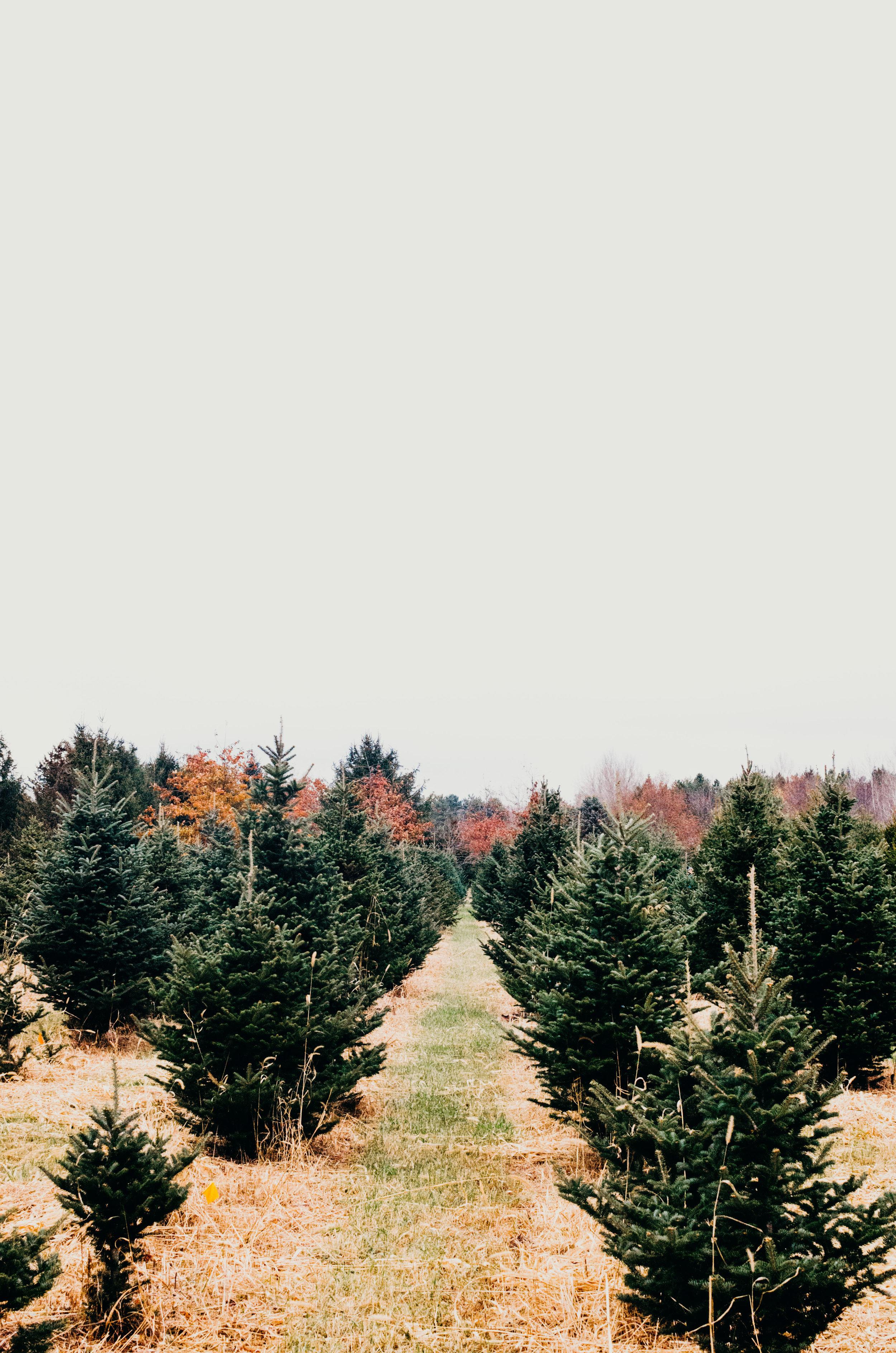 Wendling_Boyd_Tree_Hunt_2017-24.jpg