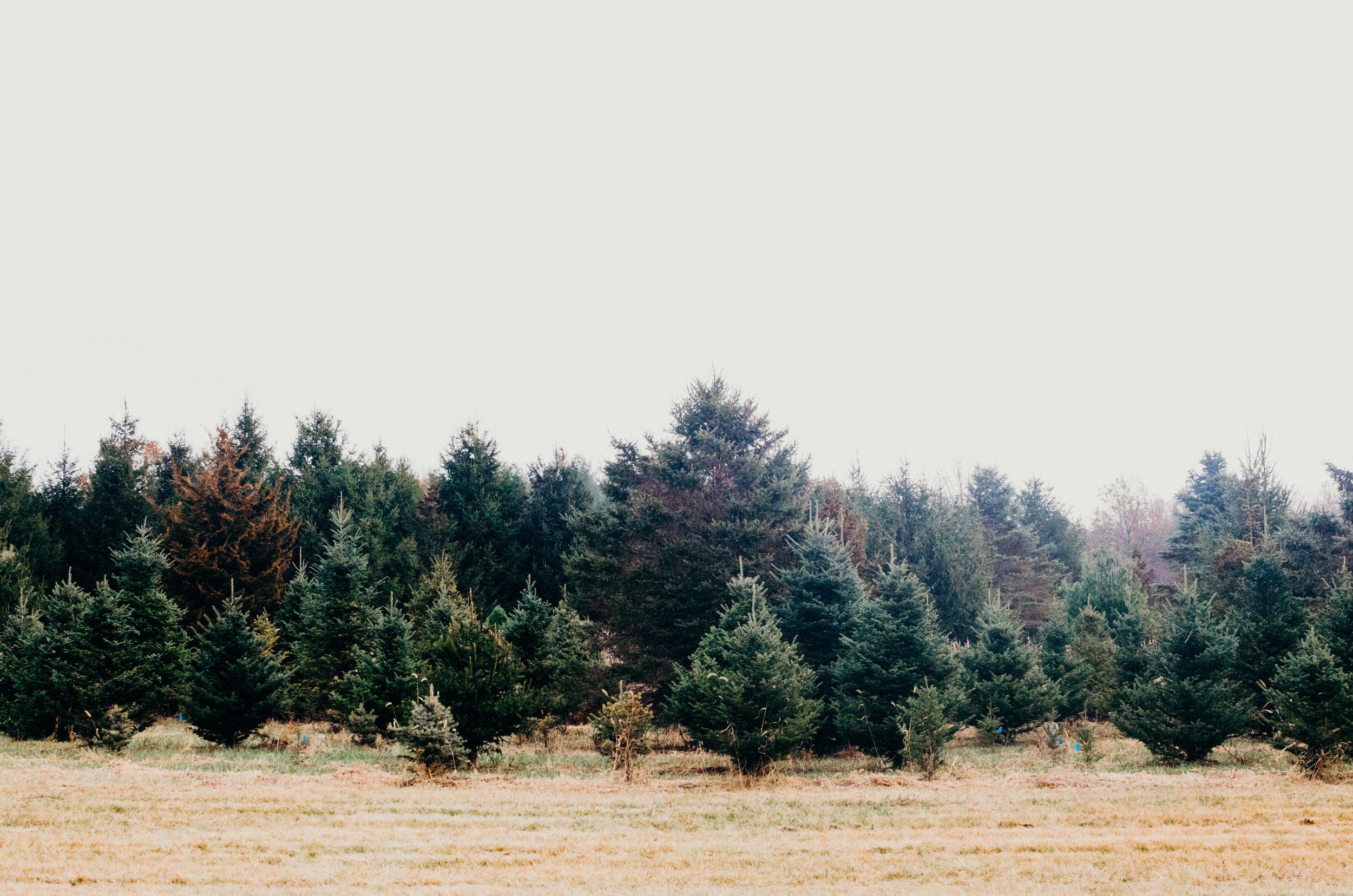 Wendling_Boyd_Tree_Hunt_2017-18.jpg